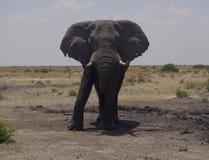Parco naturale Chobe Fotografia Stock