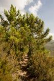 Parco naturale del deserto delle palme Fotografia Stock Libera da Diritti