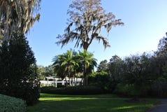 Parco naturale dell'albero del salice piangente fotografia stock libera da diritti