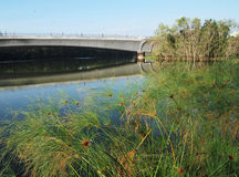 Parco naturale dell'area umida nella città Fotografie Stock Libere da Diritti