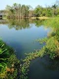 Parco naturale dell'area umida nella città Immagini Stock
