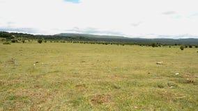 Parco naturale di Urbasa e del andia stock footage