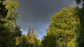 Parco naturale di Vitosha vicino a Sofia, Bulgaria Il cloudscape dorato di area dei ponti Video di lasso di tempo archivi video