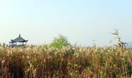 Parco naturale scenico delle paludi della zona umida della Cina fotografia stock libera da diritti