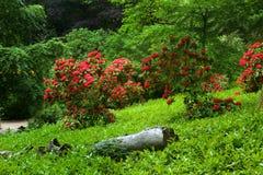 Parco nazionale Immagini Stock