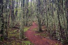 Parco nazionale Cerro Castilloe strada principale australe, peperoncino rosso, XI regione di Aysen patagonia immagine stock