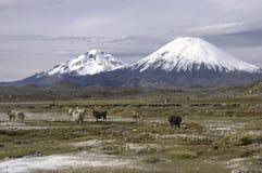 Parco nazionale Cile di Lauca Immagini Stock Libere da Diritti