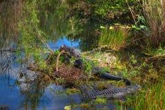 Parco nazionale dei FL-terreni paludosi Immagine Stock Libera da Diritti