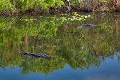Parco nazionale dei FL-terreni paludosi Fotografie Stock Libere da Diritti