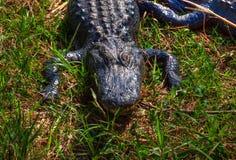 Parco nazionale dei FL-terreni paludosi Immagini Stock Libere da Diritti