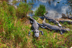 Parco nazionale dei FL-terreni paludosi Immagine Stock