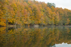 Parco nazionale dei laghi Yedigöller - di Bolu sette Fotografia Stock Libera da Diritti