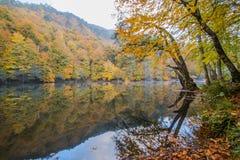 Parco nazionale dei laghi Yedigöller - di Bolu sette Immagine Stock