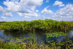 Parco nazionale dei terreni paludosi Immagine Stock