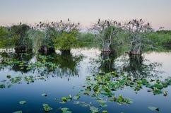 Parco nazionale dei terreni paludosi Fotografia Stock