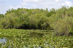 Parco nazionale dei terreni paludosi Fotografie Stock