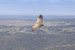Parco nazionale del ¼ e di Monfragà in Estremadura, Spagna fotografia stock libera da diritti