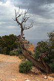 Parco nazionale del Grand Canyon, U Fotografie Stock