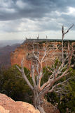 Parco nazionale del Grand Canyon, U Fotografia Stock
