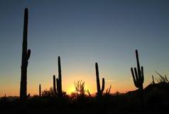 Parco nazionale del saguaro Fotografia Stock