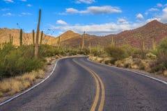Parco nazionale del saguaro Fotografie Stock