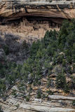 Parco nazionale del verde di MESA - abitazione di scogliera nella lan della montagna del deserto Fotografie Stock