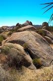 Parco nazionale dell'albero di Joshua dei massi Immagine Stock