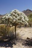 Parco nazionale dell'albero di Joshua, flora immagini stock libere da diritti