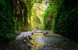 Parco nazionale della sequoia Fotografie Stock
