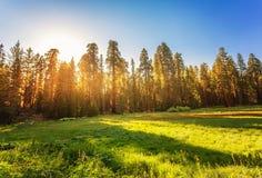 Parco nazionale della sequoia a Sierra Nevada Immagini Stock Libere da Diritti