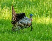Parco nazionale della Turchia Great Smoky Mountains fotografia stock libera da diritti