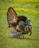 Parco nazionale della Turchia Great Smoky Mountains fotografie stock