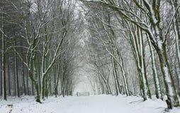 Parco nazionale Devon di Dartmoor del percorso della neve Fotografia Stock