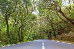 Parco nazionale di Anaga Fotografia Stock
