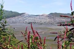 Parco nazionale di Bromo Vulcano-Tengger-Semeru Fotografia Stock Libera da Diritti
