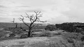 Parco nazionale di Canyonlands in bianco e nero immagine stock libera da diritti