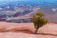 Parco nazionale di Canyonlands nell'inverno Immagini Stock Libere da Diritti