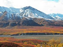 Parco nazionale di Denali Fotografia Stock Libera da Diritti