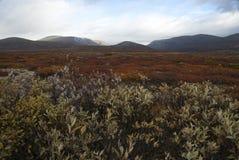 Parco nazionale di Dovre, Norvegia Fotografie Stock Libere da Diritti