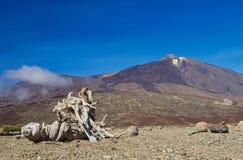Parco nazionale di EL Teide, Tenerife, isole Canarie, Spagna Fotografie Stock