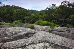 Parco nazionale di Girraween fotografia stock