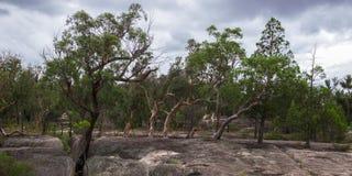 Parco nazionale di Girraween fotografie stock