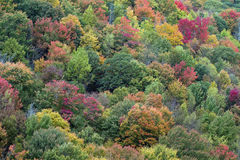 Parco nazionale di Great Smoky Mountains Fotografie Stock Libere da Diritti