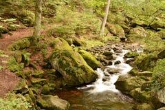 Parco nazionale di Harz Immagini Stock