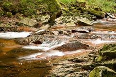 Parco nazionale di Harz Fotografia Stock