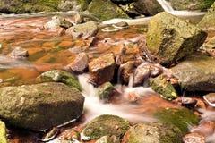 Parco nazionale di Harz Immagine Stock