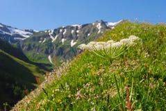 Parco nazionale di Hohe Tauern in Austria Fotografia Stock