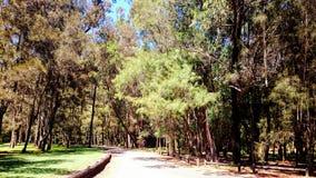 parco nazionale di inseguimento dell'Ku-anello-gai fotografia stock
