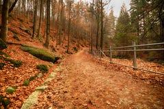Parco nazionale di Karkonoski, Szklarska Poreba, Polonia Fotografie Stock Libere da Diritti