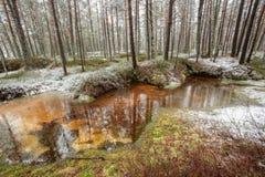 Parco nazionale di Kemeri, Riga, Lettonia Fotografie Stock